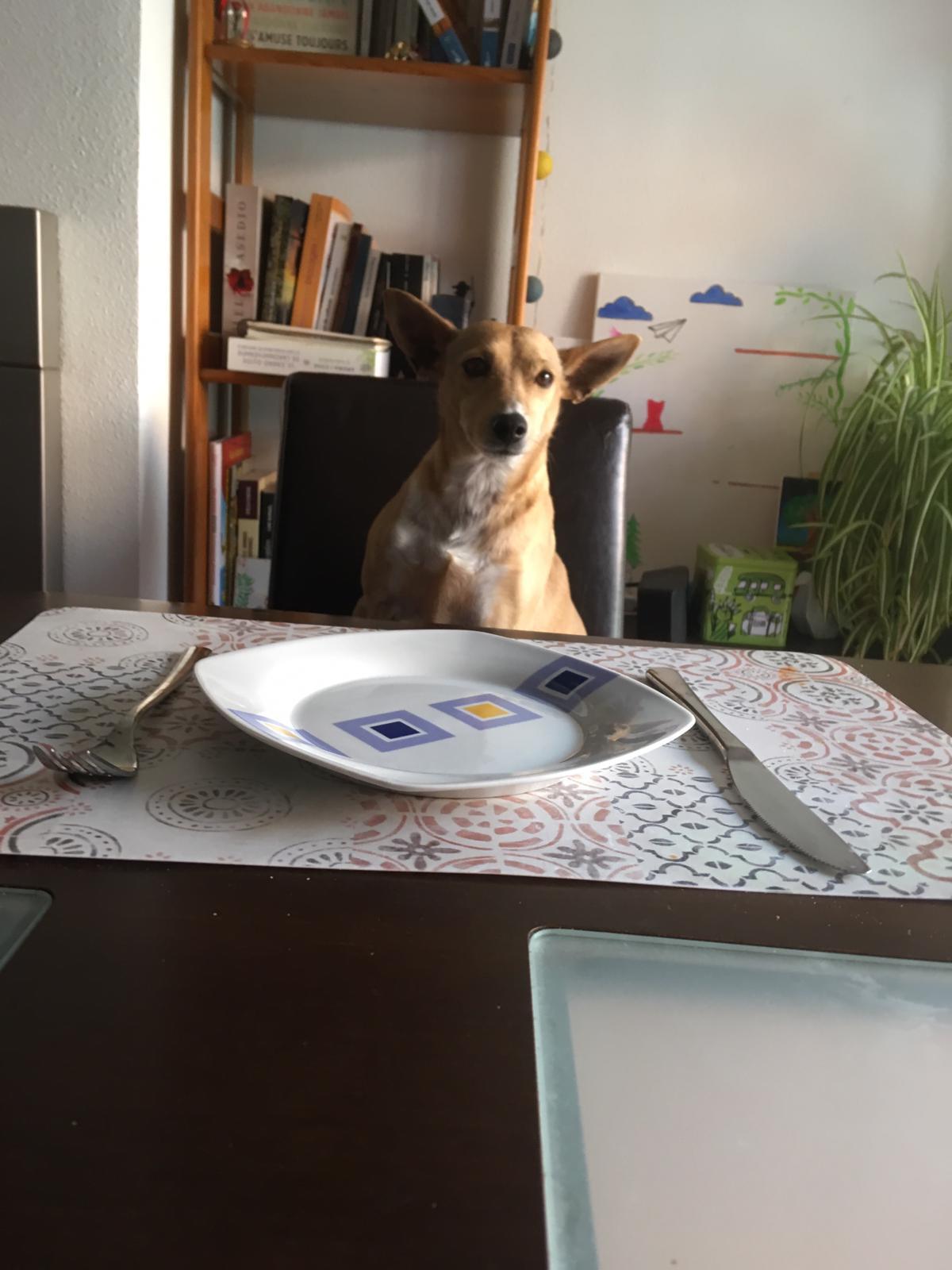 Dieta BARF: si o no?